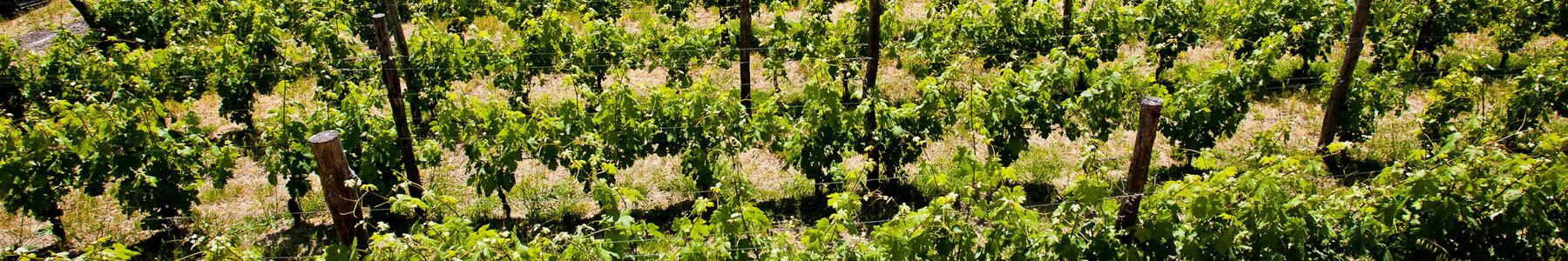 Prodotti Vino La Burlanda Fosdinovo